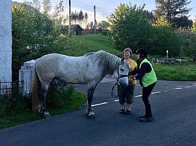 horse trekking in argyll, scotland